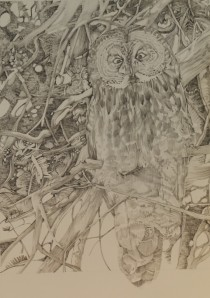 """Great Grey, Graphite on Paper, 17"""" x 11"""", 2013"""